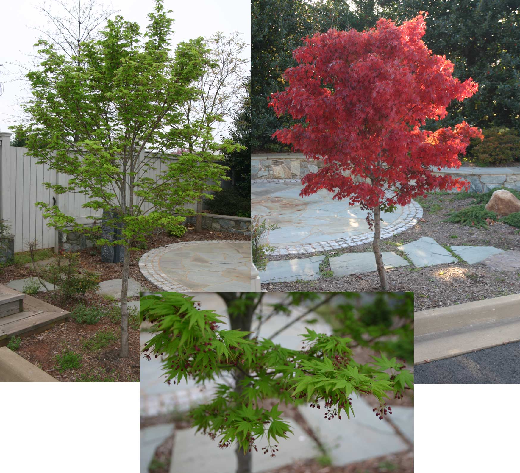 Trees For Small Spaces: Plants For Small Spaces- Part 2