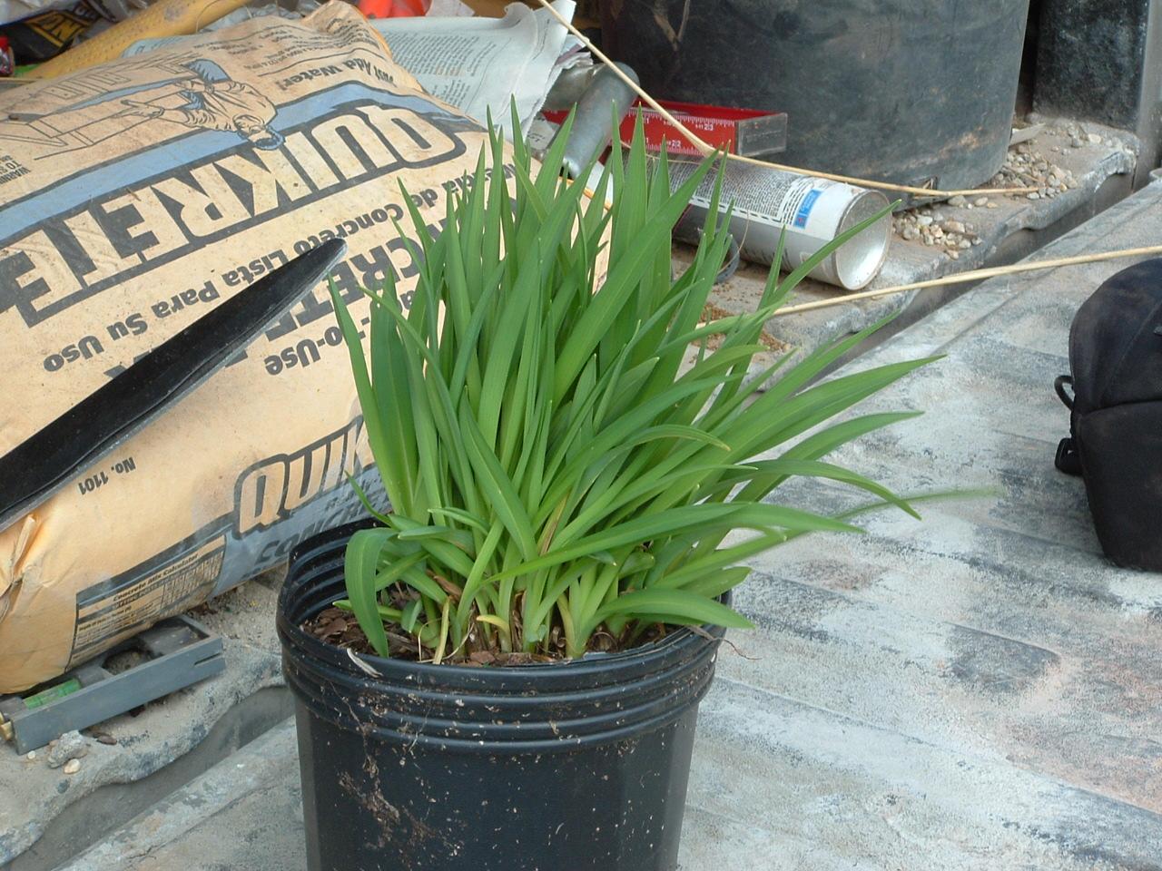 Cómo Re-Pot Plantas de interior y 5 Razones - Pistils Nursery