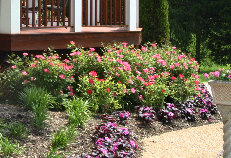 Roses In Garden: Planting Shrubs And Perennials For Cut Flowers